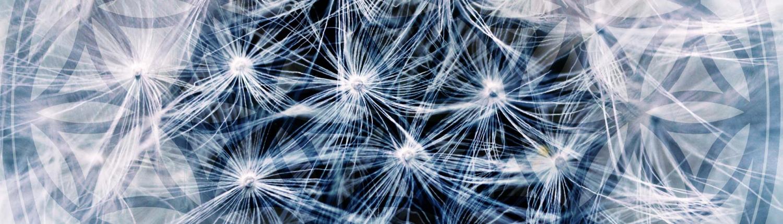 Seminar Weg zum Quantenbewusstsein Eifel