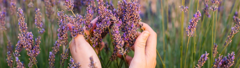 Casa Smi Datenschutz - Hände in Lavendel